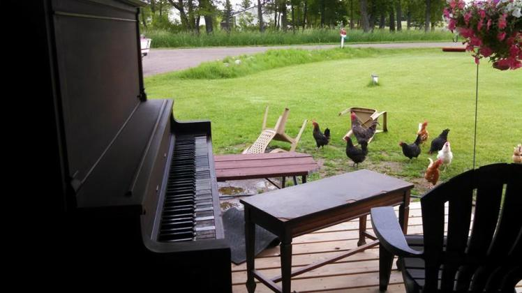 Musical chickens